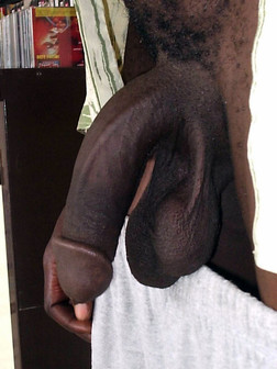 Photo collection of long erect african..